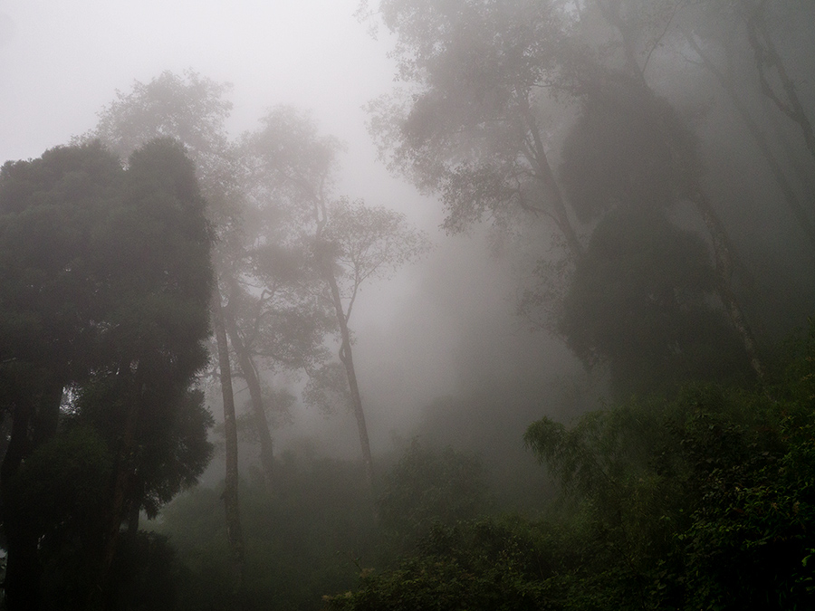 Cloudy forest on the Tenzing Norgay Road between Darjeeling and Ghum (Ghoom)