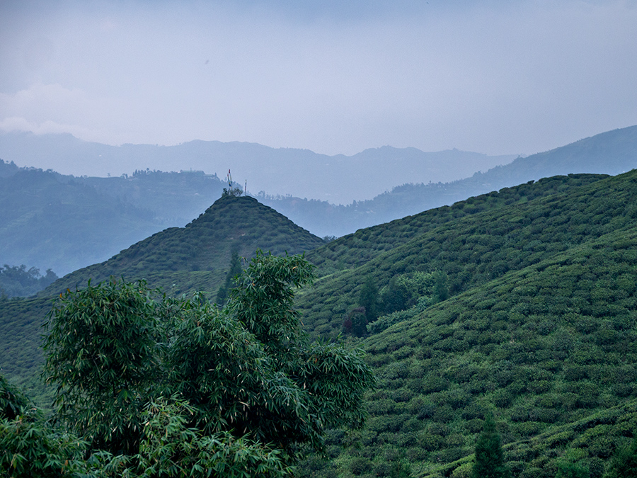 Tea plantations near Mirik, West Bengal