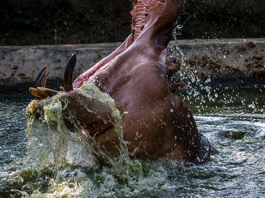 Hippo, Bhubaneswar